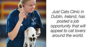 Attention Cat Lovers We Have Found The Purrfect Job For You