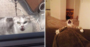 15 Cats Who Are Constantly Overreacting To Everything