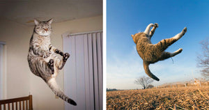 Cats Have Accomplished Their Missions On Planet Earth And Look Like They Are Being Called Back To The Mothership