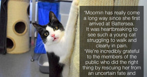 Despite Being Dumped In An Alleyway, Moomin The Cat Learns How To Walk Again