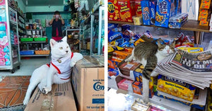 These Cool Cats Seem To Think They Own The Stores They Live In, And They're Mostly Right