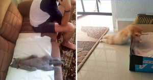 16 Pictures Proving That Cats Can Pretty Much Sleep Anywhere