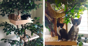 There Is A Company Selling Indoor Pet Treehouses That Look Like Actual Trees And Your Cat Needs One Right Meow