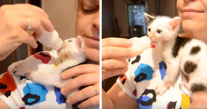 This Tiny Kitten Learned To Climb Up Her Human Mom To Get To Her Bottle And It's The Cutest Thing You Will See Today