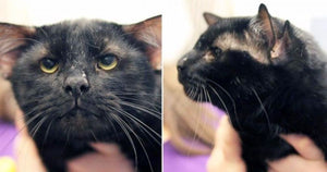 Batman The Cat With Four Ears Finds a Furrever Home