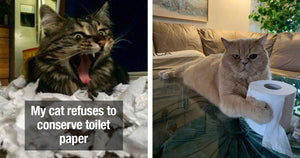 17 Naughty Cats Who Decided During A Toilet Paper Shortage Was A Good Time To Destroy Toilet Paper
