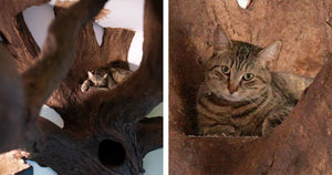 Cat Lover Creates a Fake Tree For Cats And It Looks Incredible and Realistic