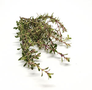 Its about Thyme