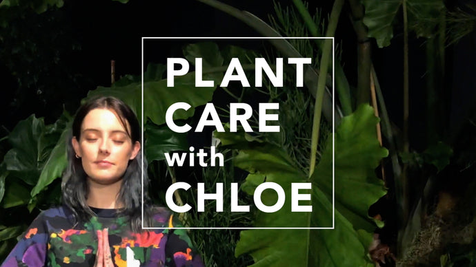 VISIONAIRE'S SUMMER IN WINTER BY LILY KWONG <br> PLANT CARE WITH CHLOE