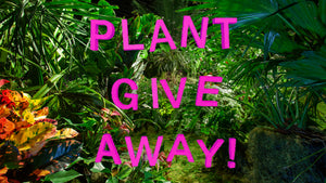 VISIONAIRE PRESENTS SUMMER IN WINTER BY LILY KWONG <br> Plant Giveaway!