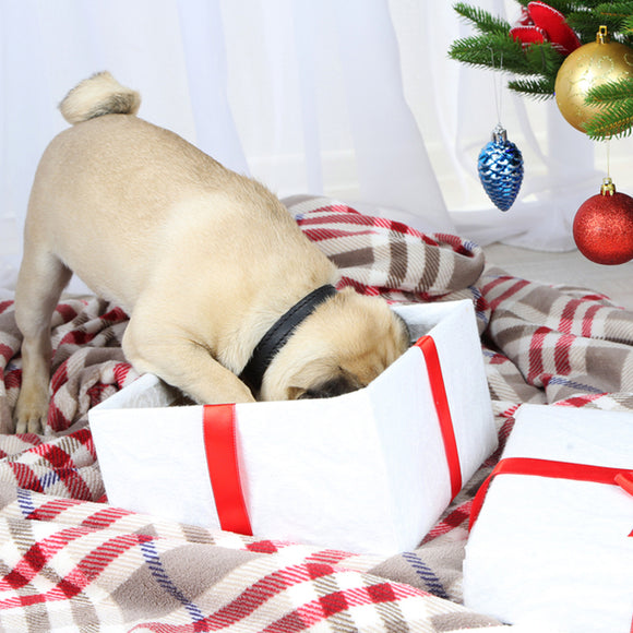 Spoil Your Canine at Christmas