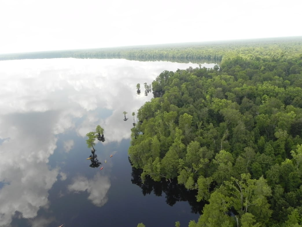 A Tour of America's Greatest Swamps