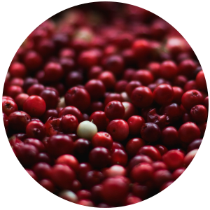Cranberry Seed (Vaccinium  macrocarpon) Carrier Oil