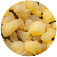 Frankincense (Boswelia serrata) Essential Oil
