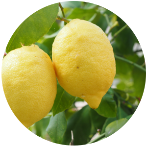 Lemon (Citrus limon) Essential Oil, Cold Pressed