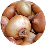 Onion (Allium cepa) Essential Oil