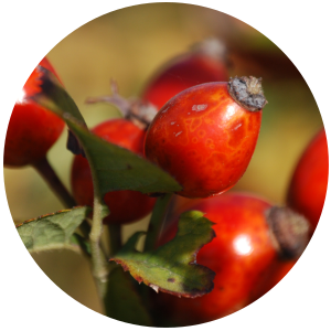 Rosehip (Rosa canina) Carrier Oil-Cold Pressed