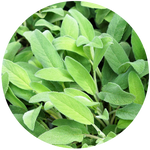 Sage (Salvia Officinalis) Essential Oil