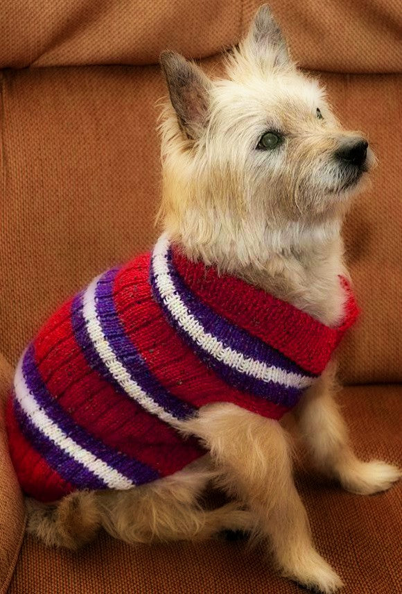 Striped Dog Sweater  - Designed by Evelyn Van Orden