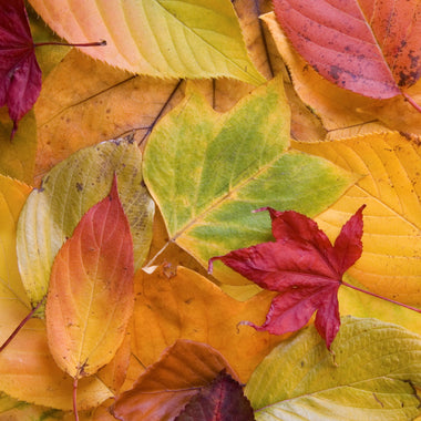 Ayurveda for an Amazing Autumn – 7 Transformative Rituals for the new Season