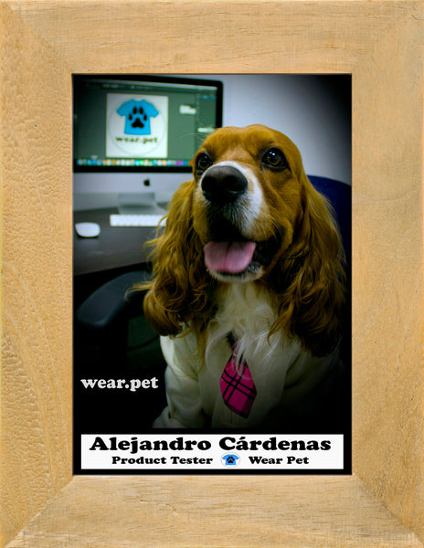 Photo of Alejo Cárdenas - Product Tester at Wear Pet - It's a Cocker Spaniel dog, wearing a tie, siting in front of a computer with the Logo of Wear Pet Brand - Photo inside of a photo frame.