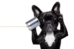 Contact Us - Wear Pet - Photo of a dog black holding a cup with a cord on it.