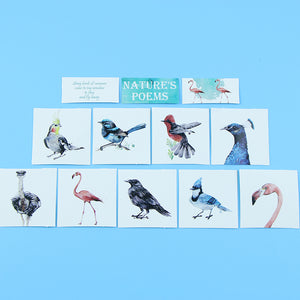 Birds, Birds, Birds - Box Set of 40 Paper Stickers