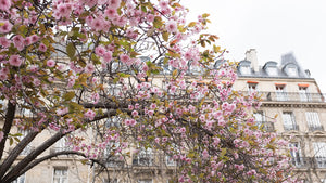 Left Bank Blossom Season in Paris - Every Day Paris