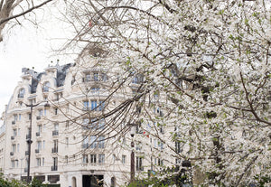 Hotel Lutetia Blossom Season in Paris - Every Day Paris