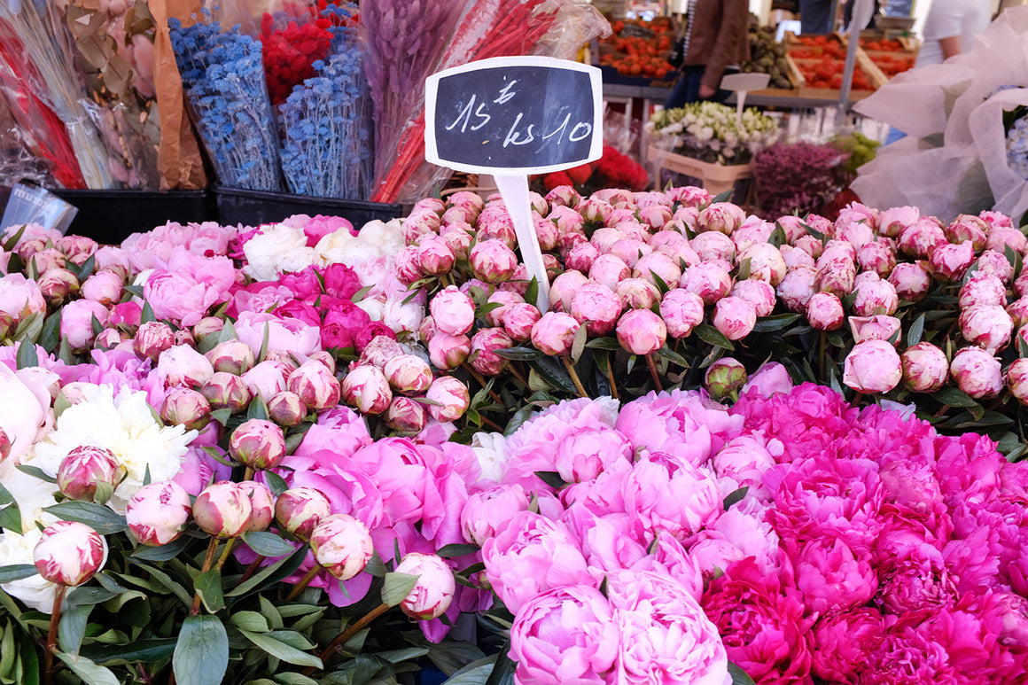 Pink Peonies for Sale in Nice France - Every Day Paris