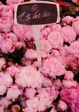 Fragrant Pink Peonies in The South of France - Every Day Paris