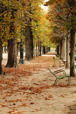 Fall in the Tuileries - Every Day Paris