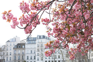 Spring in Bloom Along the Seine - Every Day Paris