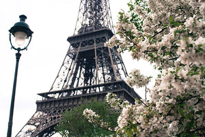 Printemps Blossoms Paris - Every Day Paris