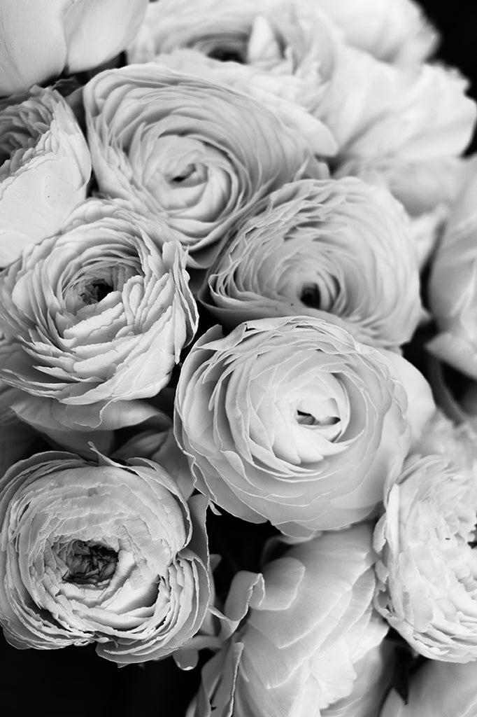 Black and White Ranunculus