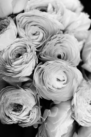 Black and White Ranunculus - Every Day Paris
