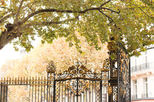 Fall in Parc Monceau - Every Day Paris