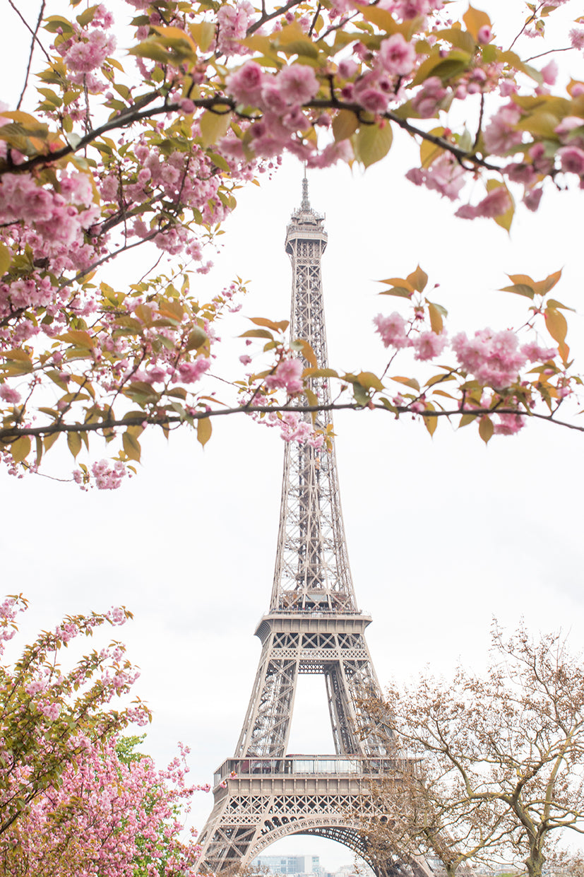 Spring Cherry Blossoms at The Eiffel Tower - Every Day Paris