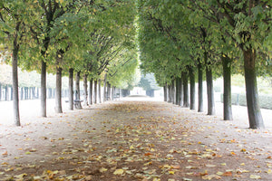 Fall in Palais Royal - Every Day Paris