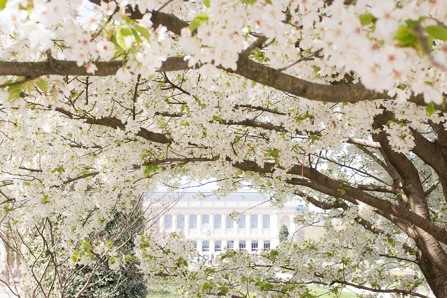 Spring in Jardin des Plantes - Every Day Paris