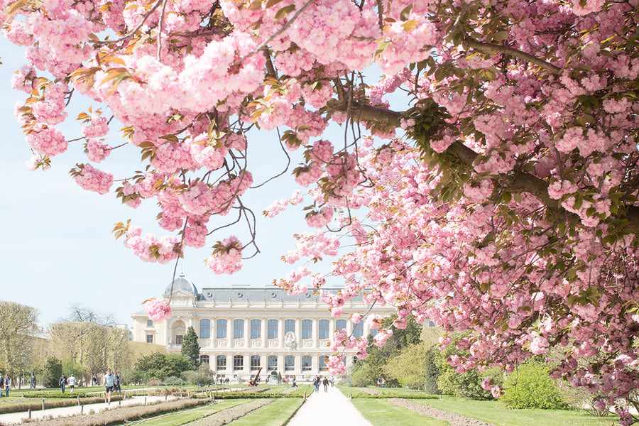 Jardin des Plantes Spring Blossoms - Every Day Paris
