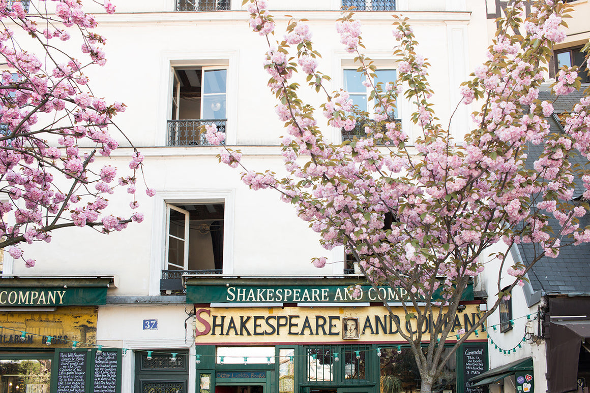 Cherry Blossoms at Shakespeare and Company - Every Day Paris