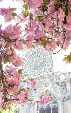 Paris in Bloom Cherry Blossom Season Notre Dame - Every Day Paris