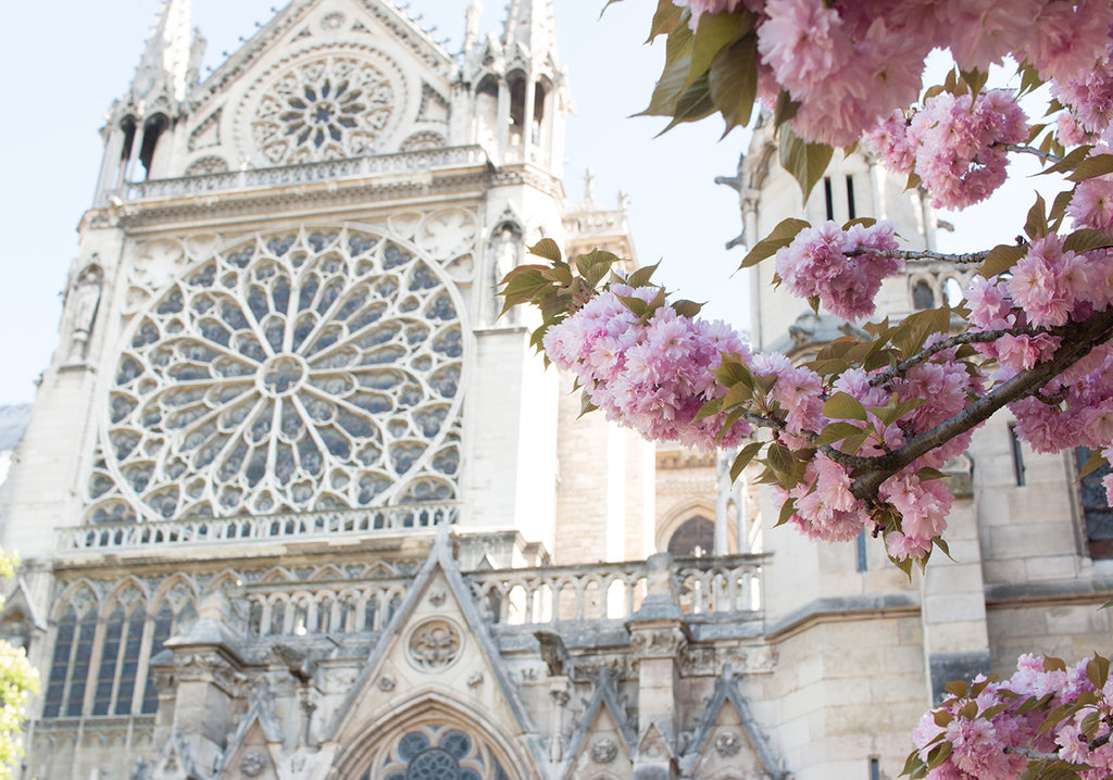 Notre Dame Spring in Bloom - Every Day Paris