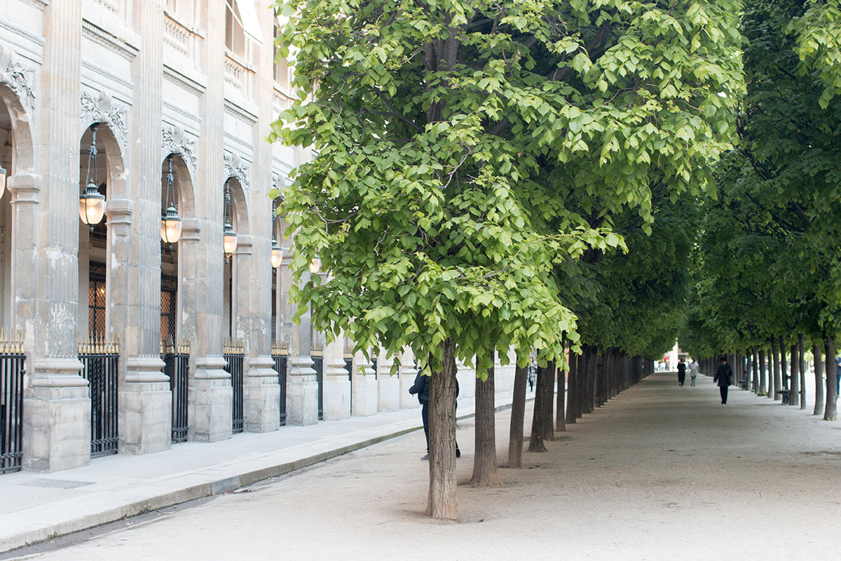 Spring Walk Through Palais Royal - Every Day Paris