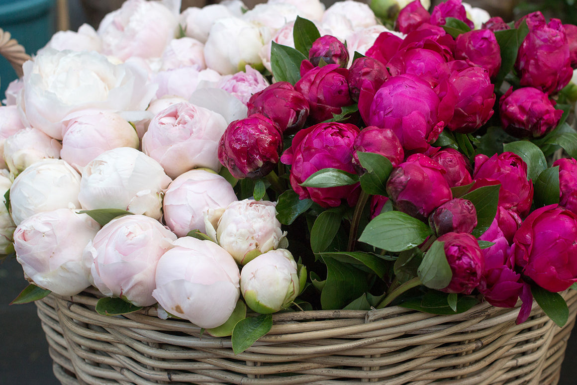 Paris Pink Peonies for Sale - Every Day Paris