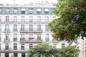 Spring Blossoms on the Right Bank of Paris - Every Day Paris