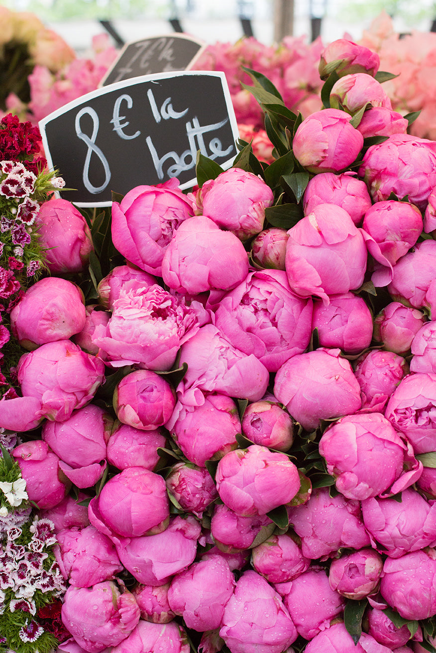 Pink Peonies for Sale at the Paris Market - Every Day Paris