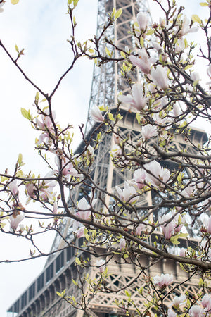 Spring Eiffel Tower in Bloom with Magnolias - Every Day Paris