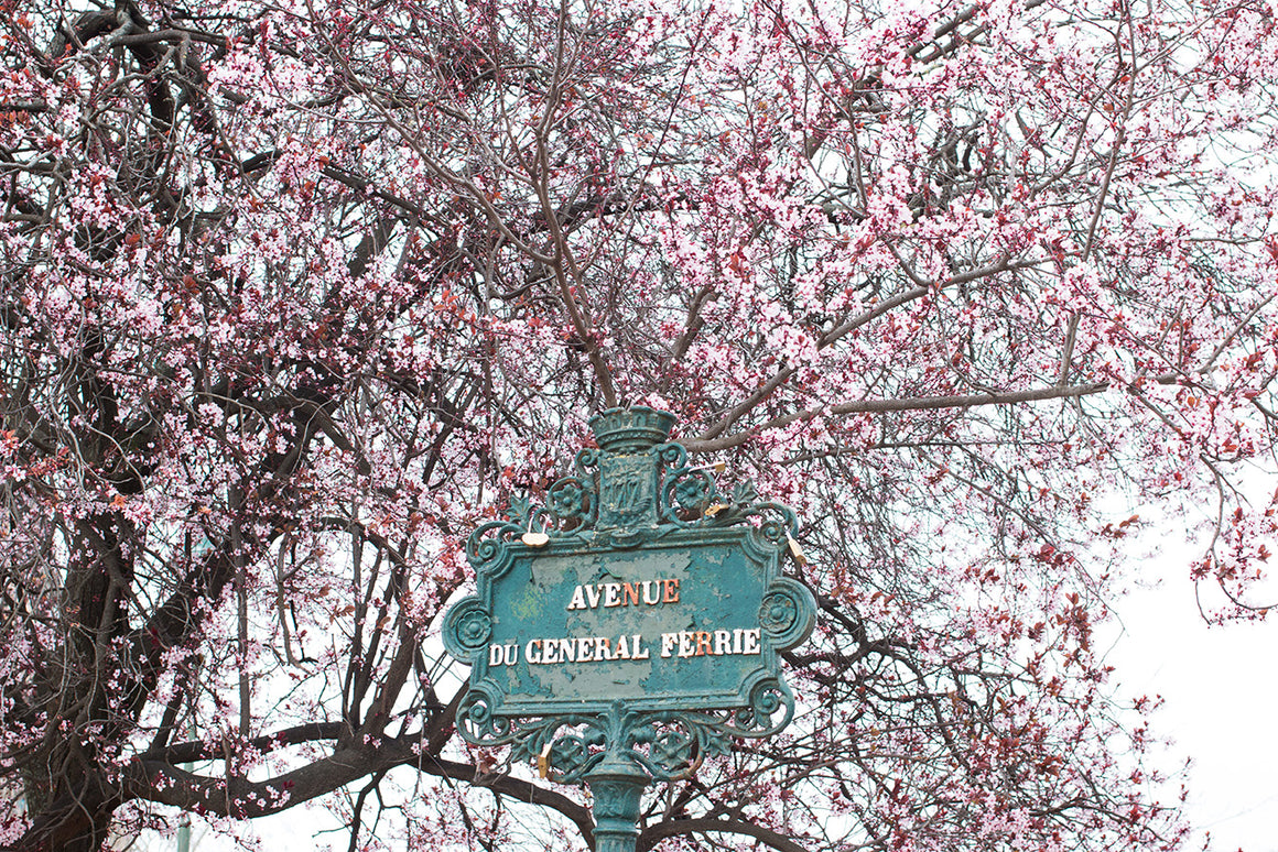 Spring on the Champs de Mars - Every Day Paris